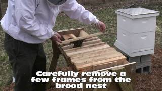 How To Install A Package Of Bees In A Top Bar Hive (tbh/ktbh)