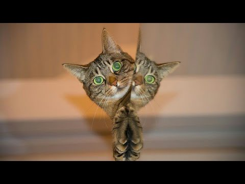 Cats are so funny you will die laughing - Funny cat compilation!!!!! Funny