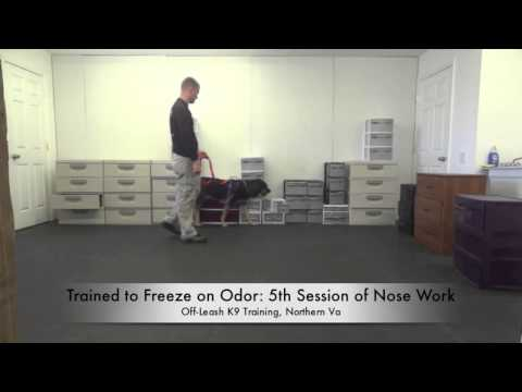 an-average-day-at-off-leash-k9-training!-best-dog-training,-northern-virginia!