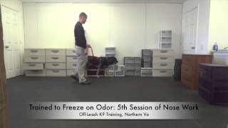An Average Day At Off-leash K9 Training! Best Dog Training, Northern Virginia!