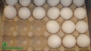 Existují lidé, kterým vejce neublíží?