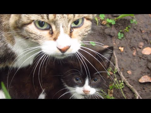 Kitten with mother cat in the bushes