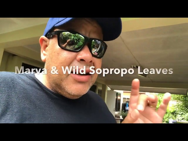 Mission in Suriname Powerful Plants Marva Nettle & Wild Soproppo 2019