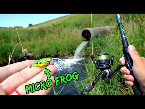 micro-frog-lure-creek-fishing-challenge!!