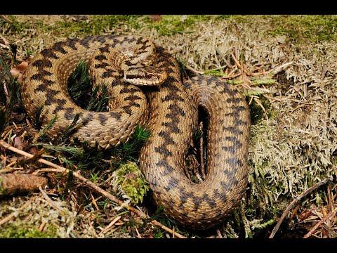 Как избавиться от змей на даче простым способом