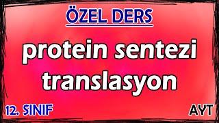 5) Protein Sentezi - Translasyon - Özel Ders (12. Sınıf)