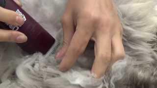 Стрижка колтунов у кота(, 2013-08-12T20:05:33.000Z)