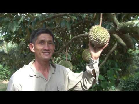 Mr Chew's Fruit Farm - Mao Shan Wang Durian - Rare Mangoesteen - Sarawak Pineapple - Jan 2014
