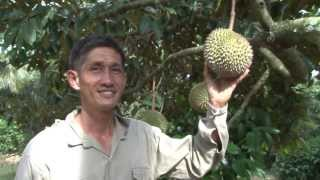 Mr Chew's Fruit Farm - Mao Shan Wang Durian - Rare Mangoesteen - Sarawak Pineapple - Jan 2014