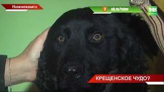 Собака воскресла из мёртвых: в Нижнекамске произошла курьёзная история - ТНВ