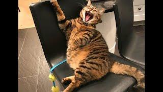 Самые смешные животные в мире Приколы с животными 2021 СМЕШНОЕ ВИДЕО ПРО КОТОВ