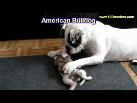 Shar Pei, Puppies, Dogs, For Sale, In Jackson, Mississippi, MS, 19Breeders, Hattiesburg, Tupelo from YouTube · Duration:  44 seconds