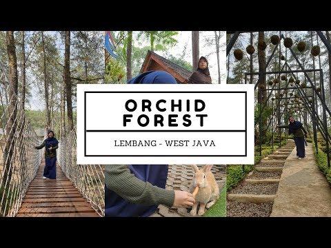 ga-nyesel-ke-orchid-forest-cikole-lembang---west-java