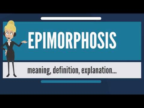 What is EPIMORPHOSIS? What does EPIMORPHOSIS mean? EPIMORPHOSIS meaning, definition & explanation