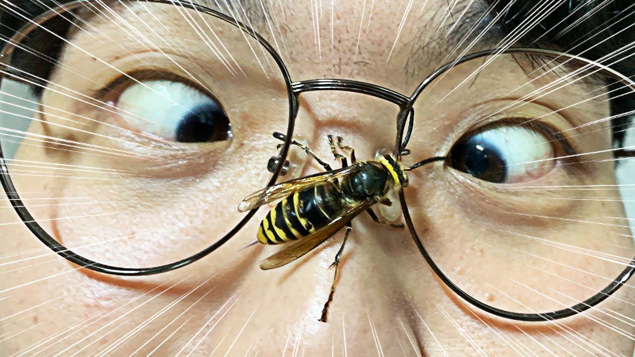 말벌과 같이 사는 남자를 소개합니다!