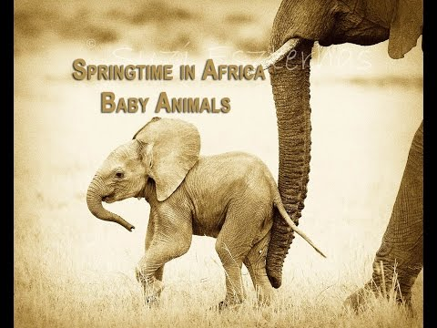 Springtime In Africa: Baby Animals
