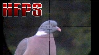 Slow Motion Airgun Pigeon Hunting #16