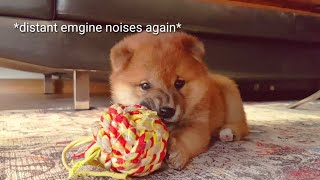 haters-gonna-hate-potaters-gonna-potate-shiba-inu-puppies-with-captions