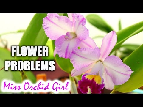 Orchid flowering problems