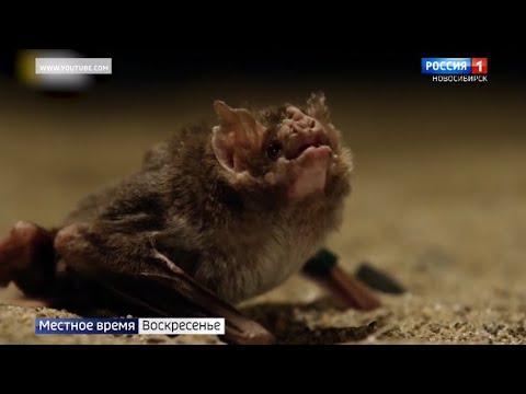 Вопрос: Чем опасны летучие мыши, обитающие в России?