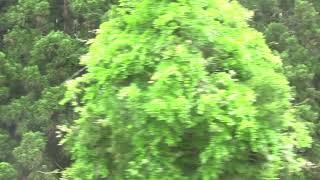 【側面展望】485系「リゾートやまどり」快速谷川岳もぐら号越後湯沢行き 土合→越後湯沢