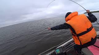 Окунь на джиг Одна приманка сделала рыбалку