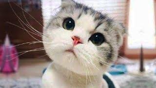 おかしい猫 - かわいい猫 - おもしろ猫動画 HD #209