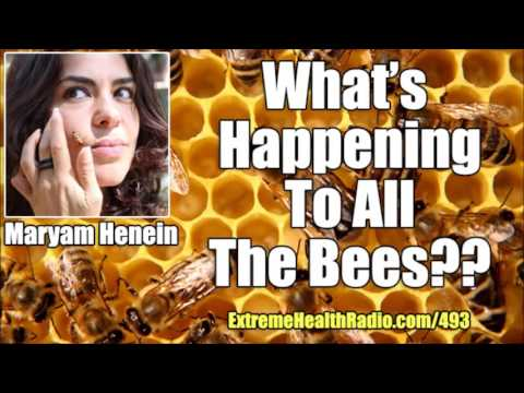 Honey Bee Colony Collapse Disorder Where Are All The Bees?