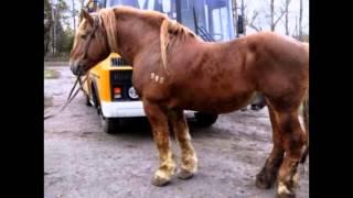 nai silnite kone na sveta