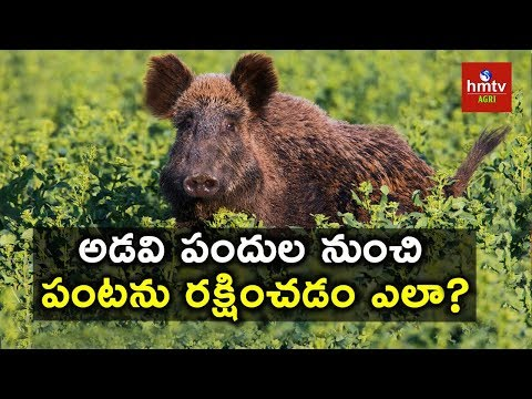 How to Protect Crops From Wild Animals | hmtv Agri