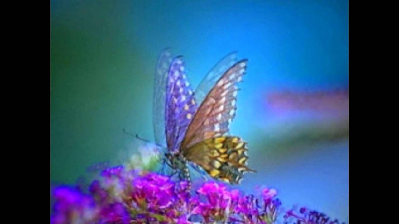 butterfly images youtube