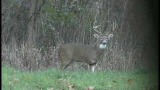 Bow hunting monster Ohio bucks! Deer hunting at it
