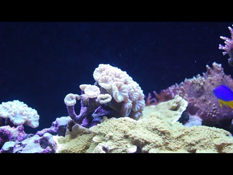 Debunking Myths About Coral - Is Coral A Plant?