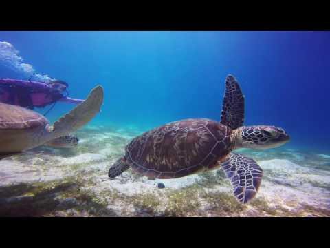 Philippines Dive Safari with Fun and Sun June 2016