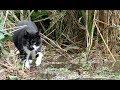 【地域猫】台風21号襲来!猫達は危機を見事に乗り切る!【魚くれくれ野良猫製作委員会】