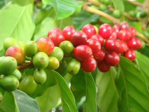 Coffee - [n] Ethiopia's ultimate gift to the world.