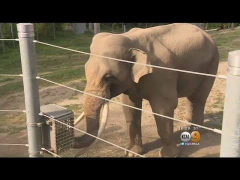 Cher, Lily Tomlin Want Billy The Elephant Moved Out Of L.A. Zoo