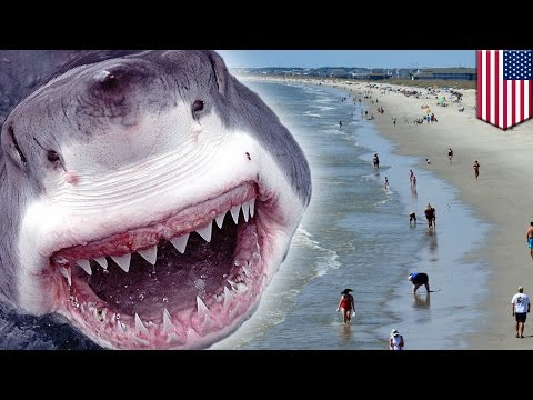 Shark attacks two teens, eats their arms at beach in Oak Island, North Carolina - TomoNews