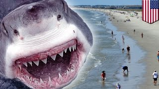 Shark attacks two teens, eats their arms at beach in Oak Island, North Carolina - TomoNews