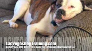 Las Vegas Nevada Aggressive Puppy Dog Obedience Trainers
