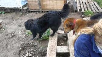 Fericire ja uudet kotia etsivät koirat 31.5.14