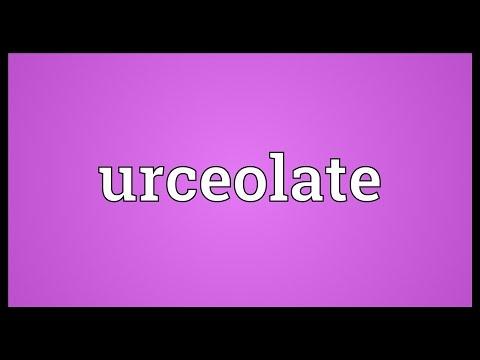 Header of urceolate