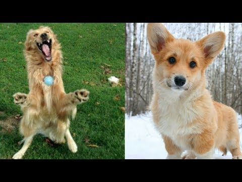 Ultimate FUNNIEST DOG | Funny Pet Videos #8