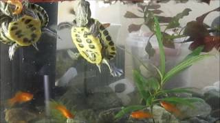 черепахи и рыбы кормление