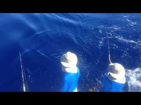 Bermuda White Marlin Trolling Offshore Argus Bank