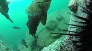 мыс Тобизина, прыжок со скалы, утопление камеры.  жизнь на дне моря