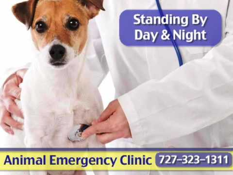 Late Night Dental Emergency Clinic Find Local Dentist