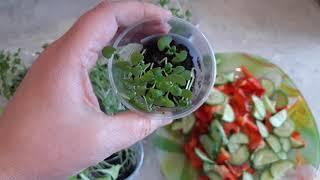 Своя свежая зелень в марте.Базилик , кресс-салат , листовой салат с подоконника.