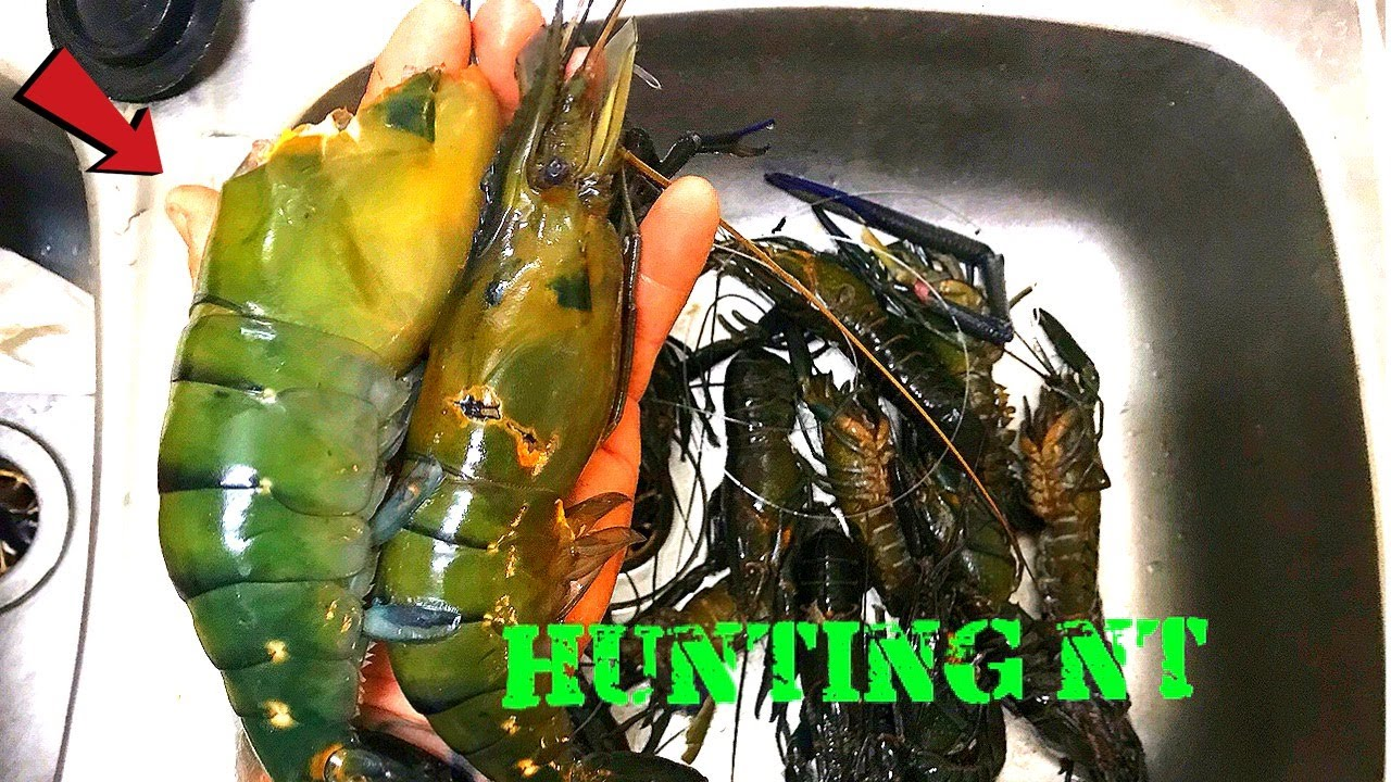 MONSTER RIVER PRAWNS Catch & Cook