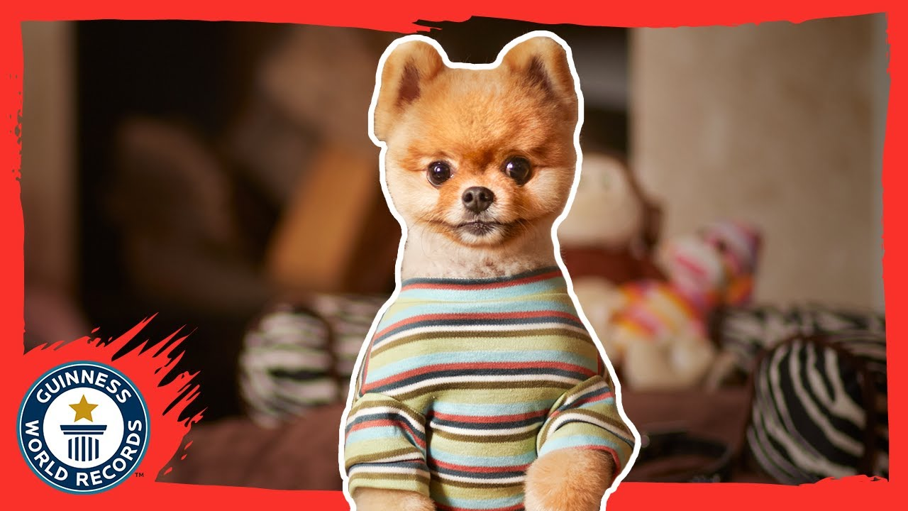 jiffpom the fastest dog on two paws guinness world records 2015 youtube - Smallest Cat In The World Guinness 2015